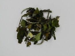 Tropical White Tea