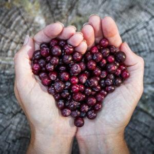 huckleberry dark balsamic