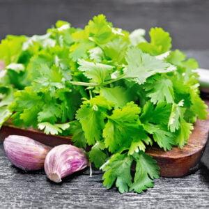 Cilantro fresh with garlic on black board